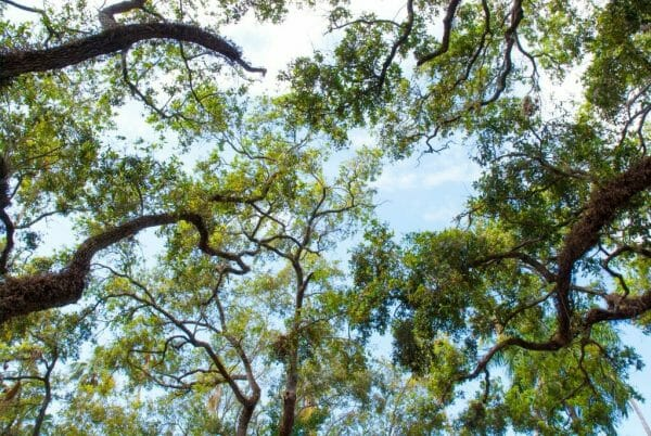 Trees at Burroughs Home in Fort Myers
