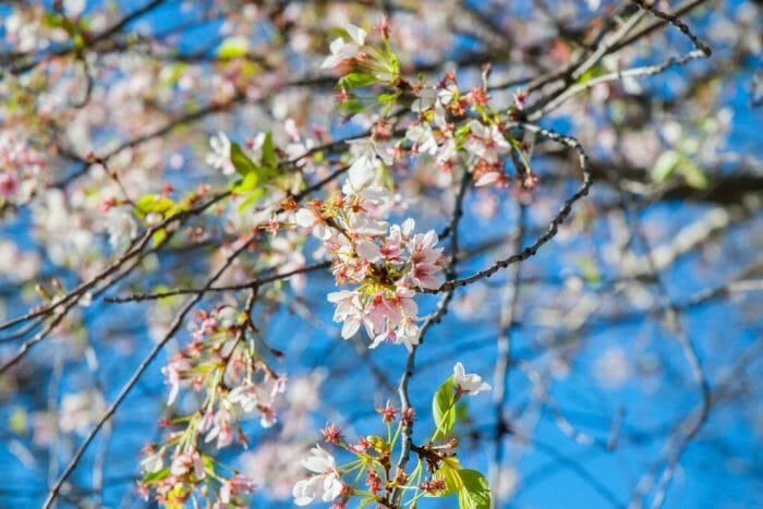 spring in Philadelphia