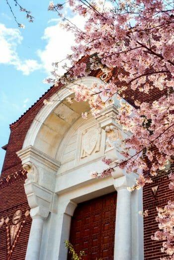 Cherry blossoms in Philadelphia