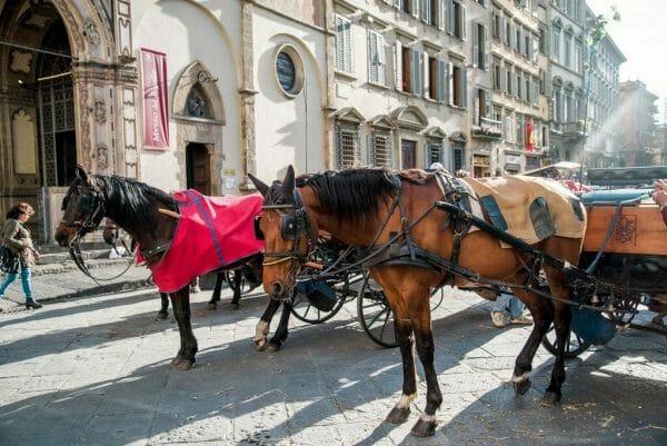 Florence horses