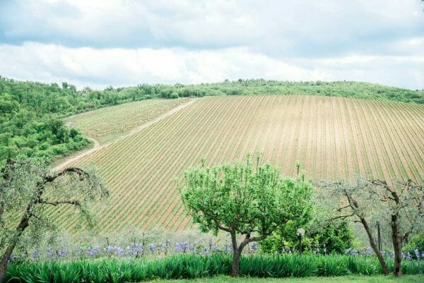 Querceto di Castellina vineyard