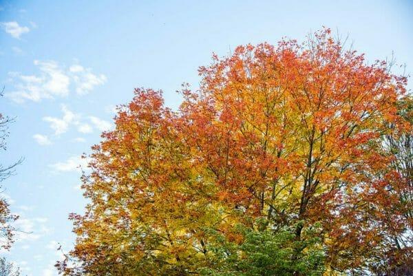 Fall in Philadelphia