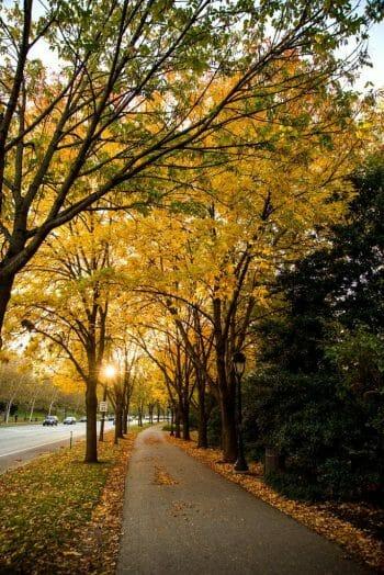 Fall leaves in Philadelphia