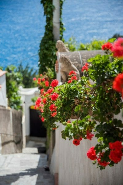 Flowers in Praiano, Italy