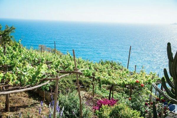 Praiano, Italy vineyard