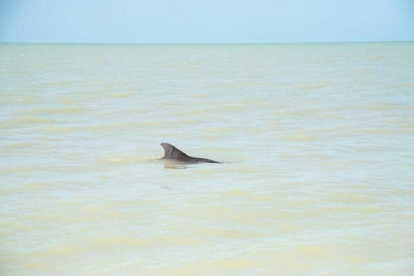 Dolphin in Florida