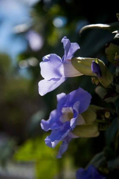 Purple flowers in Florida