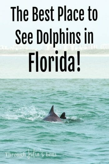Boat Ride in Bonita Springs: The Best Place to See Dolphins in Florida
