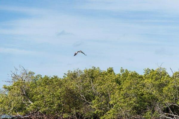 Bird in Bonita Springs