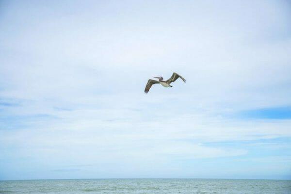 Bird flying in Florida