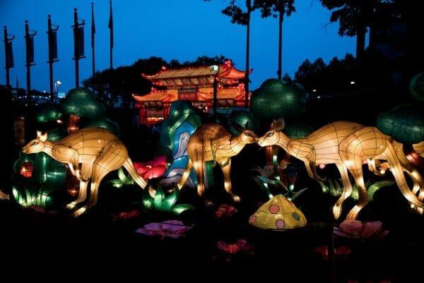 Chinese lantern kangaroos
