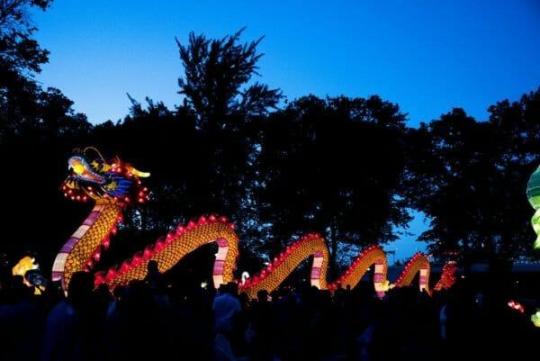Chinese lantern dragon