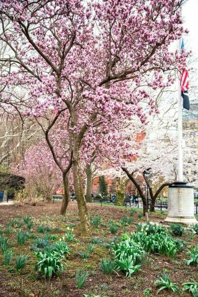Flowers in Washington Square