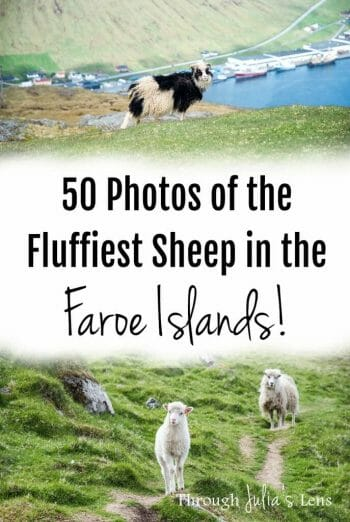 50 Photos of the Cutest, Fluffiest Sheep in the Faroe Islands