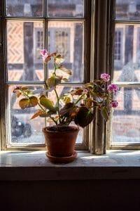 Potted flowers in Aarhus