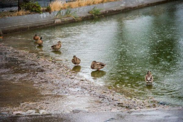 Pond in Nordby, Samsø
