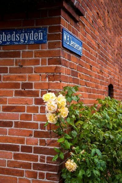 Spring flowers in Denmark