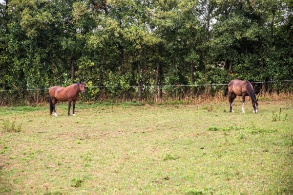Horses in Samsø