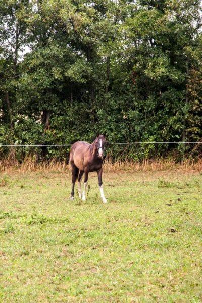 Horse in Samsø