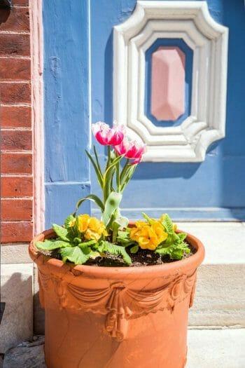 Spring tulips in Philadelphia