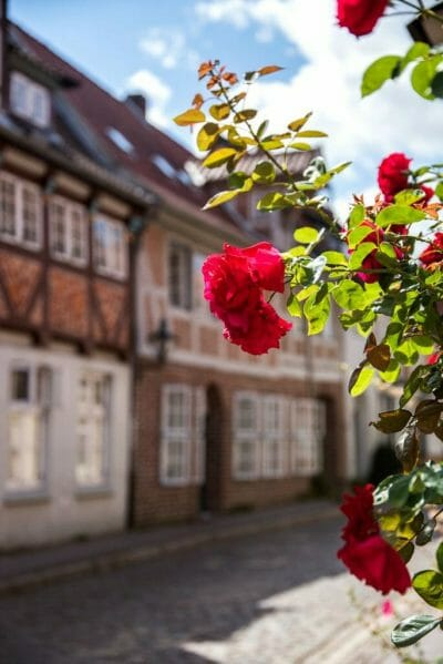 Red roses with historic German house