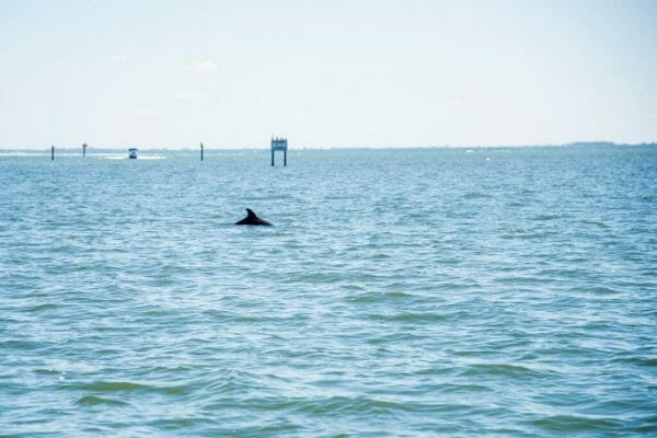 Dolphins on boat ride in Florida