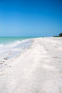 Seashells on Sanibel Island