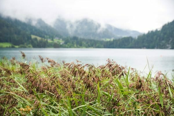 Fog over Alps on Hintersteiner See