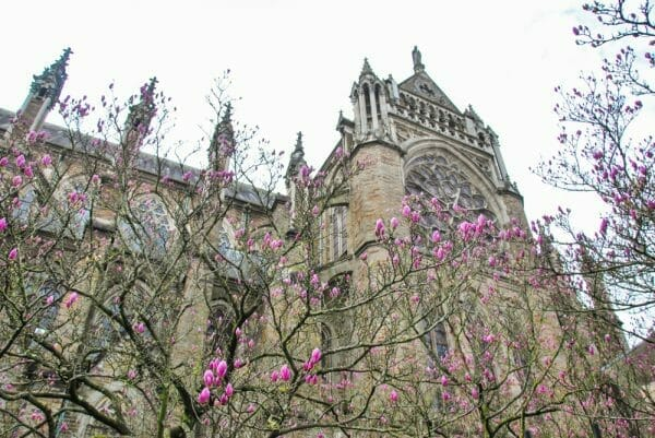 Cathedral in Nantes with pink flowers