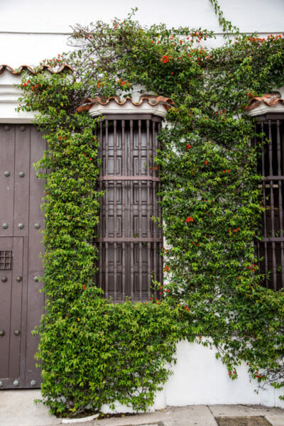 Historic house with vines in old city Cartagena