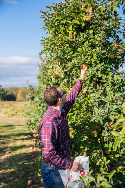 Apple picking in Lancaster County