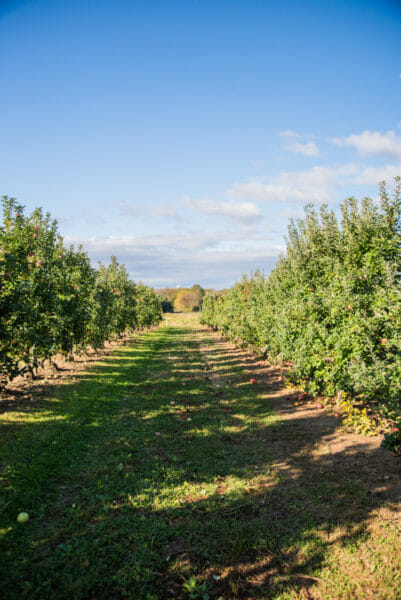 Apple orchard in Lancaster County