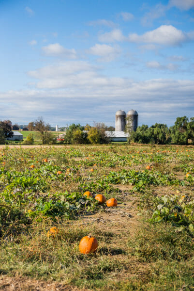 Pumpkin patch in Lancaster County