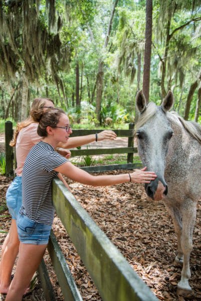 Two teenage girls petting a white horse on Daufuskie Island
