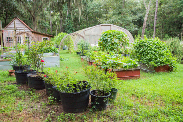 Garden with herbs and flowers at Daufuskie Island Community Farm