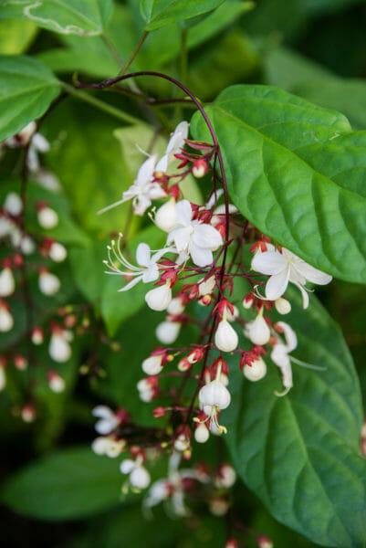 White lightbulb flower