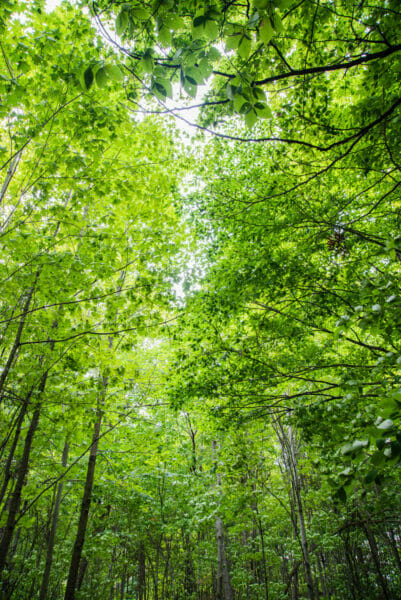 View of green leaves on trees at Point au Roche State Park in Plattsburgh, NY