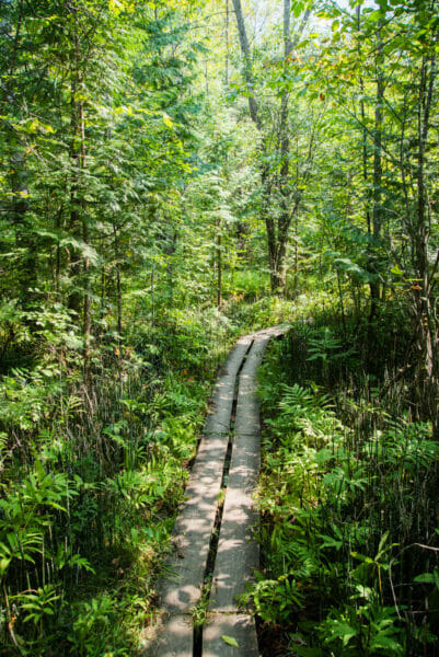 Hiking trail in forest at Grand Isle State Park, Vermont