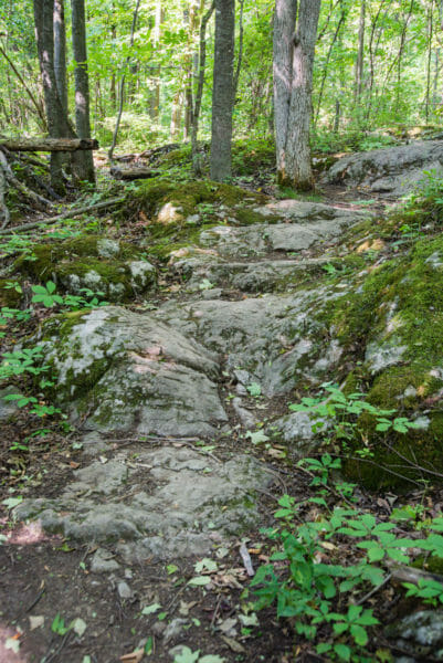 Hiking trail at Grand Isle State Park, Vermont
