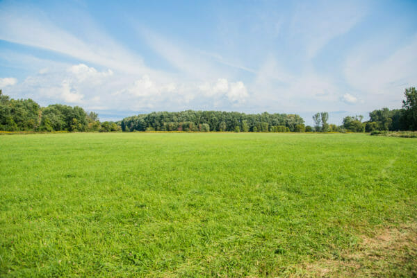 Field of green grass and trees at the Ethan Allen farm