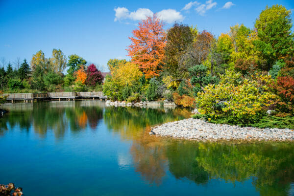 Pond with trees changing to fall colors at Meijer Gardens