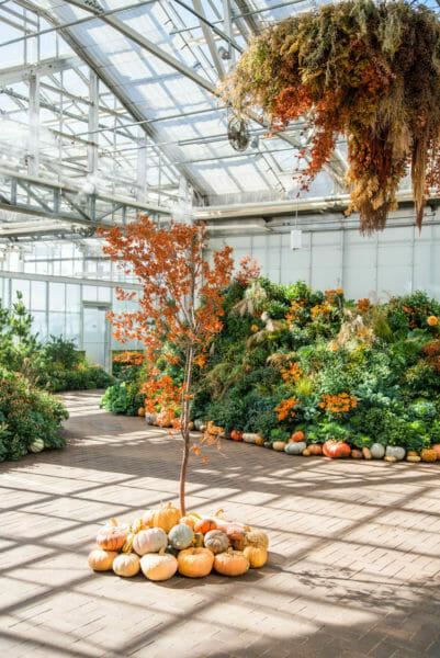 Pumpkin decorations in greenhouse in Meijer Gardens