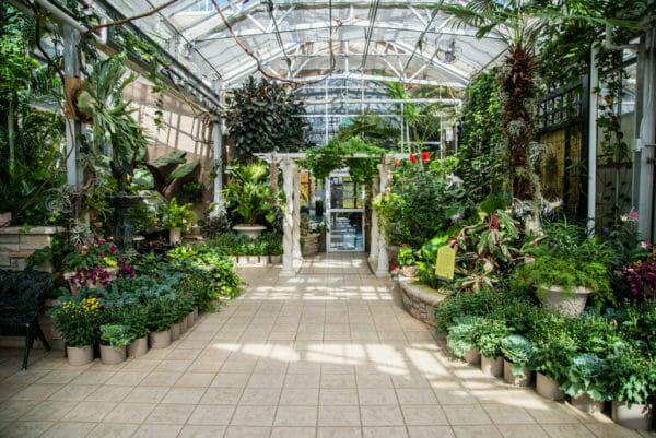 Inside greenhouse with a variety of plants in Meijer Gardens