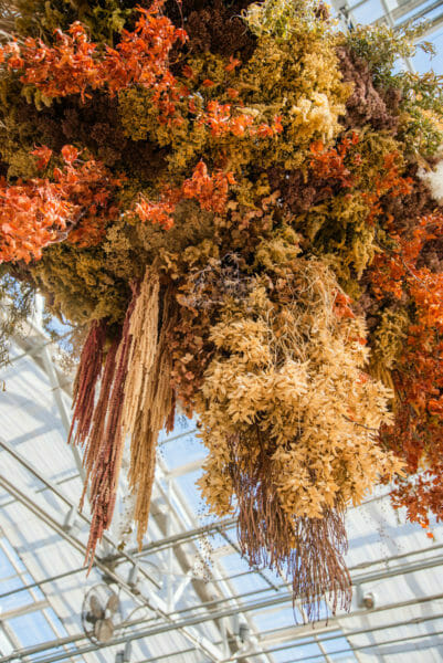 Orange flower decor hanging from greenhouse ceiling at Meijer Gardens