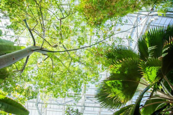 Trees growing inside greenhouse at Meijer Gardens