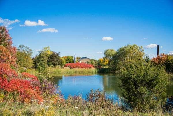 Pond with trees with red leaves at Meijer Gardens